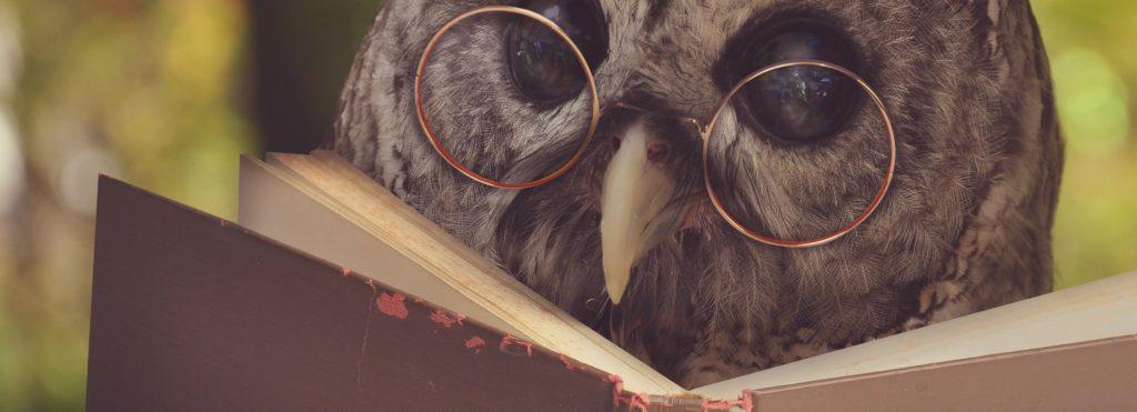 A studious owl